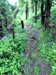 Trail scenery 2